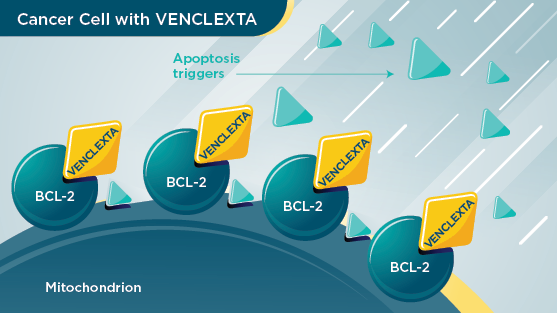 VENCLEXTA targeting BCL-2 proteins